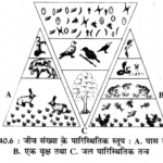 RBSE Solutions for Class 11 Biology Chapter 40 पारिस्थितिक तंत्र