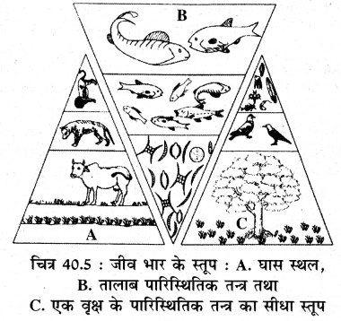 RBSE Solutions for Class 11 Biology Chapter 40 पारिस्थितिक तंत्र img-1