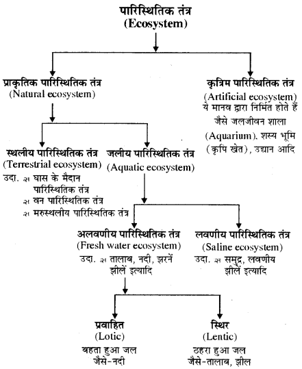 RBSE Solutions for Class 11 Biology Chapter 40 पारिस्थितिक तंत्र img-7