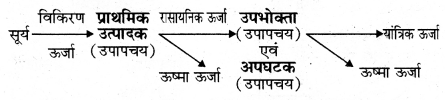 RBSE Solutions for Class 11 Biology Chapter 40 पारिस्थितिक तंत्र img-8