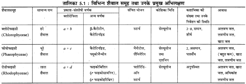 RBSE Solutions for Class 11 Biology Chapter 5 पादप जगत img-3