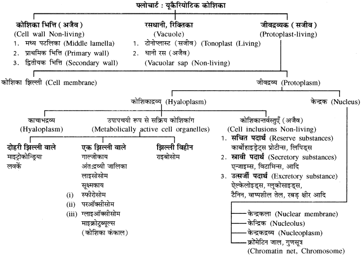 RBSE Solutions for Class 11 Biology Chapter 6 कोशिका img-5