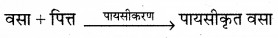 RBSE Solutions for Class 12 Biology Chapter 22 मानव का पाचन तंत्र 13