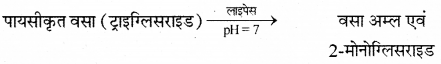 RBSE Solutions for Class 12 Biology Chapter 22 मानव का पाचन तंत्र 15