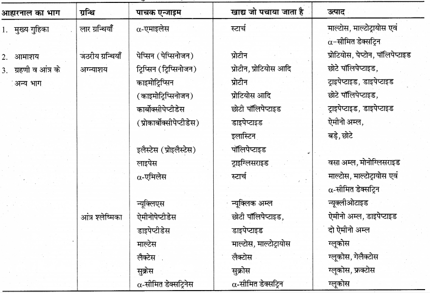 RBSE Solutions for Class 12 Biology Chapter 22 मानव का पाचन तंत्र 17