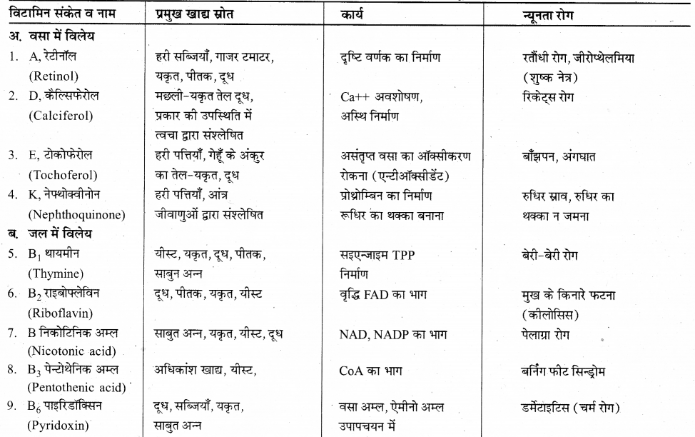 RBSE Solutions for Class 12 Biology Chapter 22 मानव का पाचन तंत्र 2
