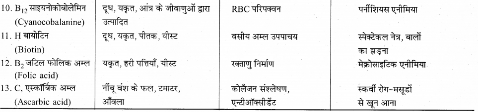 RBSE Solutions for Class 12 Biology Chapter 22 मानव का पाचन तंत्र 3