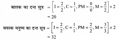 RBSE Solutions for Class 12 Biology Chapter 22 मानव का पाचन तंत्र 5