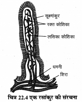 RBSE Solutions for Class 12 Biology Chapter 22 मानव का पाचन तंत्र 8