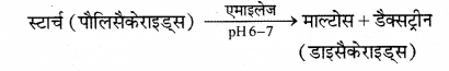 RBSE Solutions for Class 12 Biology Chapter 22 मानव का पाचन तंत्र 9