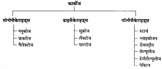 RBSE Solutions for Class 11 Home Science Chapter 13 भोजन के पोषक तत्व-वृहत् मात्रिक पोषक तत्व-1