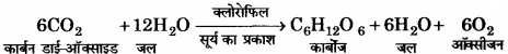 RBSE Solutions for Class 11 Home Science Chapter 13 भोजन के पोषक तत्व-वृहत् मात्रिक पोषक तत्व-2