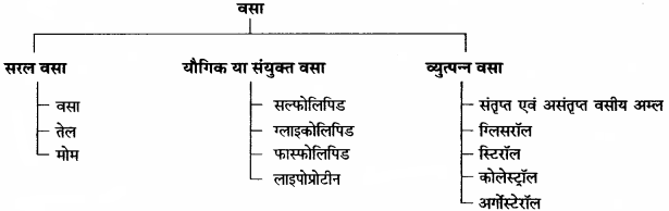 RBSE Solutions for Class 11 Home Science Chapter 13 भोजन के पोषक तत्व-वृहत् मात्रिक पोषक तत्व-3