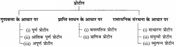 RBSE Solutions for Class 11 Home Science Chapter 13 भोजन के पोषक तत्व-वृहत् मात्रिक पोषक तत्व-4