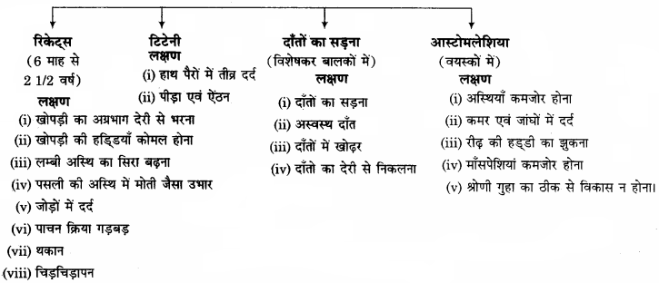 RBSE Solutions for Class 11 Home Science Chapter 14 भोजन के पोषक तत्व-सूक्ष्म मात्रिक-3