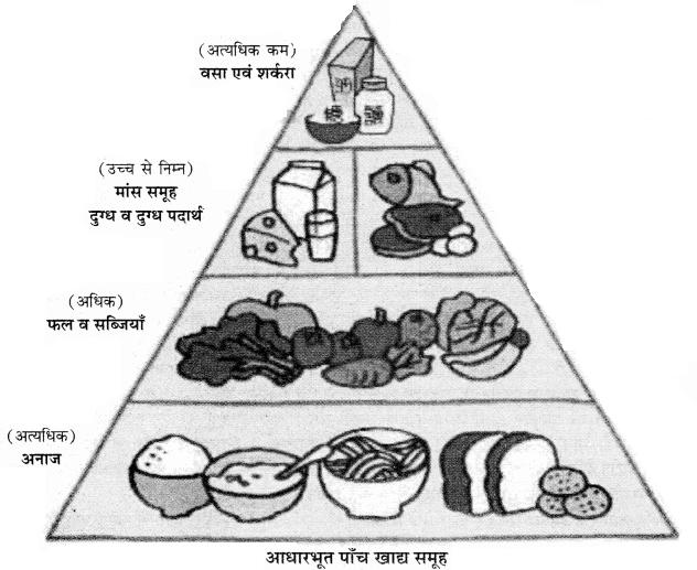 RBSE Solutions for Class 11 Home Science Chapter 15 सन्तुलित आहार एवं भोज्य समूह-5