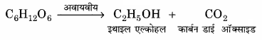RBSE Solutions for Class 11 Home Science Chapter 16 पाक क्रिया एवं भोजन की पौष्टिकता बढ़ाना