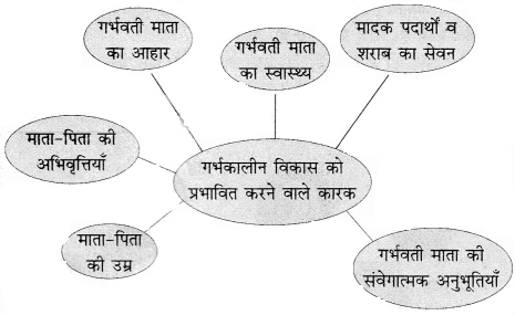 RBSE Solutions for Class 11 Home Science Chapter 4 गर्भावस्था-2