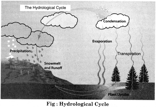 RBSE Solutions for Class 11 Physical Geography Chapter 17 Hydrological Cycle and Distribution of Water Bodies img-1