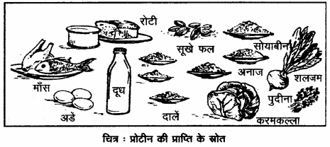 RBSE Solutions for Class 12 Home Science Chapter 16 विशिष्ट अवस्था में पोषण- गर्भावस्था - 2
