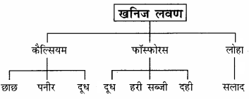 RBSE Solutions for Class 12 Home Science Chapter 16 विशिष्ट अवस्था में पोषण- गर्भावस्था - 4