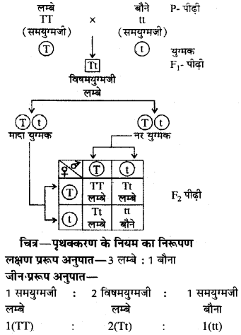 RBSE Class 10 Science Model Paper 1 image 10