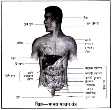 RBSE Class 10 Science Model Paper 1 image 17