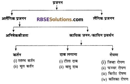 RBSE Solutions for Class 12 Biology Chapter 1 आवृतबीजी पादपों में जनन; कायिक, अलैंगिक, लैंगिक 1