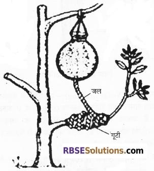 RBSE Solutions for Class 12 Biology Chapter 1 आवृतबीजी पादपों में जनन; कायिक, अलैंगिक, लैंगिक 4