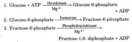 RBSE Solutions for Class 12 Biology Chapter 11 श्वसन 15