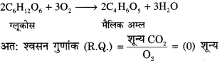 RBSE Solutions for Class 12 Biology Chapter 11 श्वसन 27