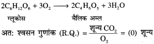 RBSE Solutions for Class 12 Biology Chapter 11 श्वसन 33
