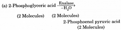 RBSE Solutions for Class 12 Biology Chapter 11 श्वसन 53