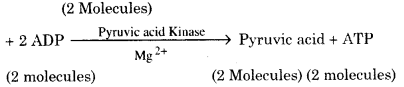 RBSE Solutions for Class 12 Biology Chapter 11 श्वसन 54