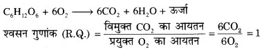 RBSE Solutions for Class 12 Biology Chapter 11 श्वसन 57