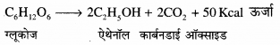 RBSE Solutions for Class 12 Biology Chapter 11 श्वसन 6