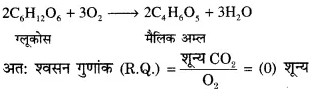 RBSE Solutions for Class 12 Biology Chapter 11 श्वसन 60
