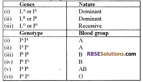 RBSE Solutions for Class 12 Biology Chapter 24 Man-Blood Vascular, System 4