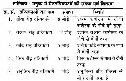 RBSE Solutions for Class 12 Biology Chapter 26 मानव का तंत्रिका तंत्र 6