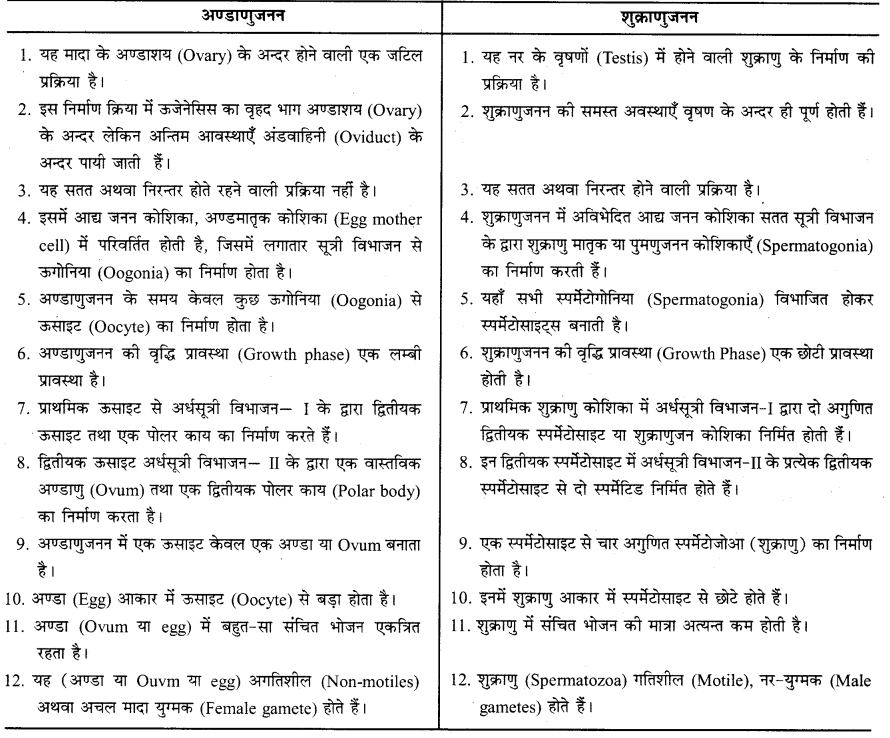 RBSE Solutions for Class 12 Biology Chapter 31 मानव में युग्मकजनन 4
