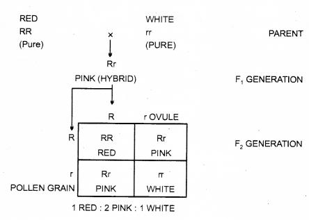 RBSE Solutions for Class 12 Biology Chapter 35 मेंडल के आनुवंशिकता के नियम 3