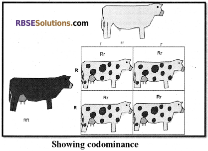 RBSE Solutions for Class 12 Biology Chapter 35 Mendel's Law of Inheritance img 1