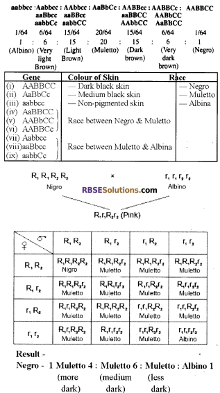 RBSE Solutions for Class 12 Biology Chapter 35 Mendel's Law of Inheritance img 3