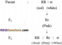 RBSE Solutions for Class 12 Biology Chapter 35 Mendel's Law of Inheritance img 4