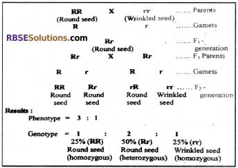 RBSE Solutions for Class 12 Biology Chapter 35 Mendel's Law of Inheritance img 7