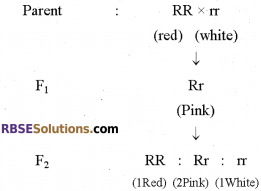 RBSE Solutions for Class 12 Biology Chapter 35 Mendel's Law of Inheritance img 9