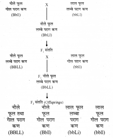 RBSE Solutions for Class 12 Biology Chapter 36 मानव में गुणसूत्रीय विकृतियाँ 2