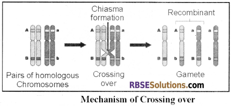 RBSE Solutions for Class 12 Biology Chapter 36 Man-Chromosomal Aberrations img 6