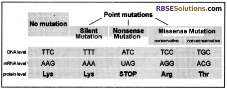 RBSE Solutions for Class 12 Biology Chapter 37 Mutations img 1