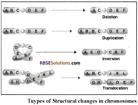 RBSE Solutions for Class 12 Biology Chapter 37 Mutations img 2